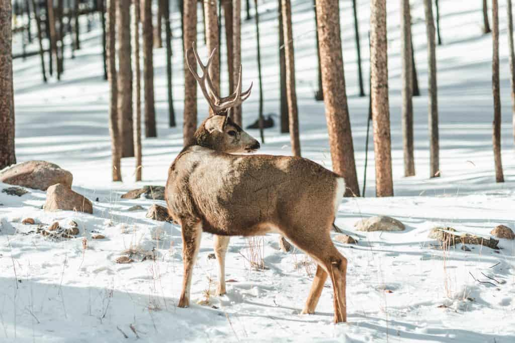 Deer Tracking & Hunting