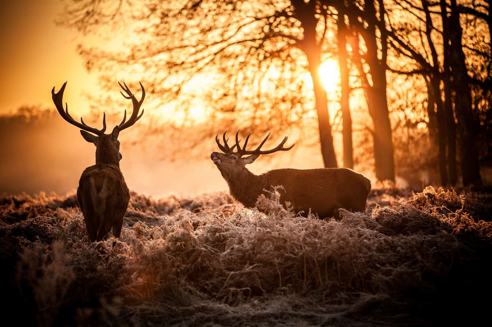Hunting Tips For Deer Hunters - All You Will Need To Know