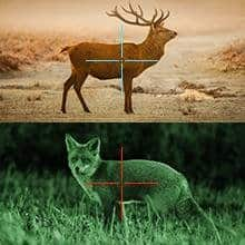 Day and night vision of animals