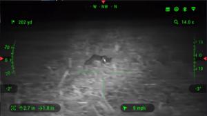 animal in the dark