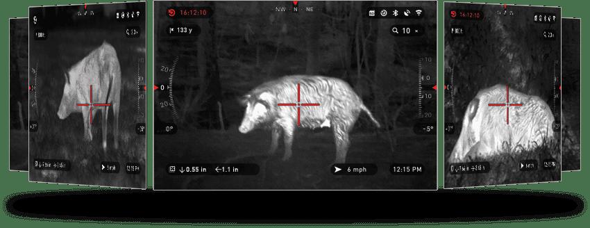 animal in the night