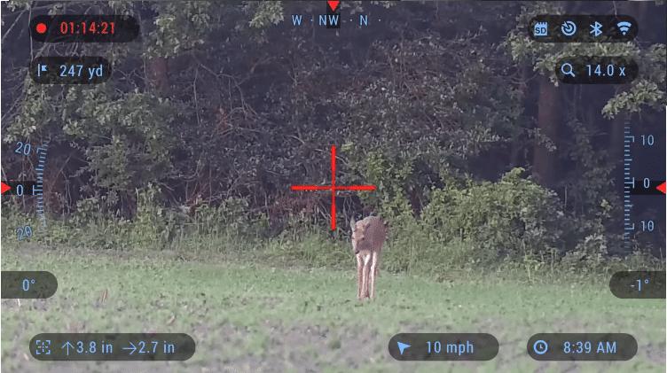 deer in the daylight