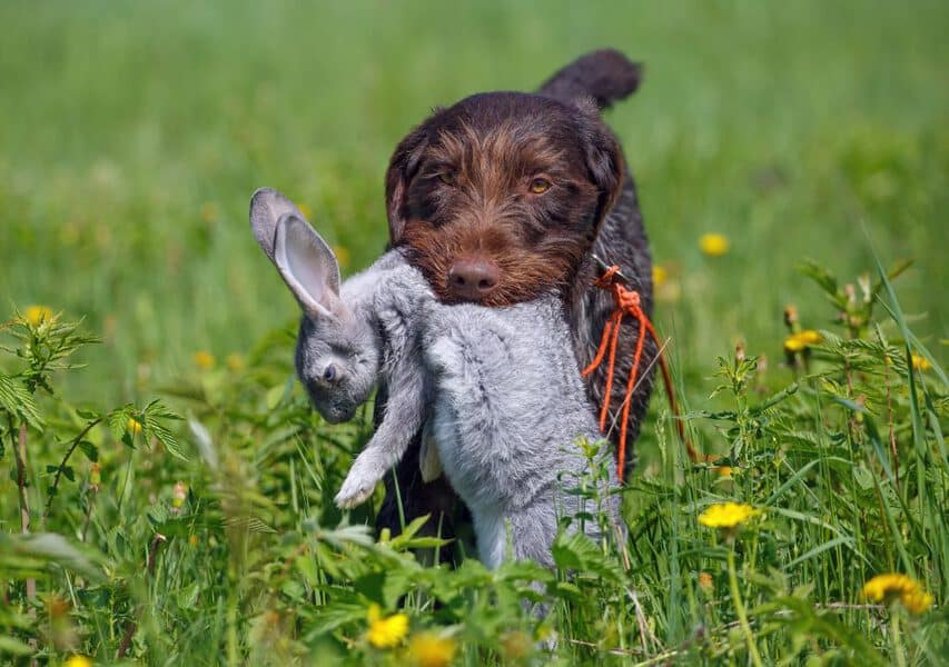 dog with rabbit